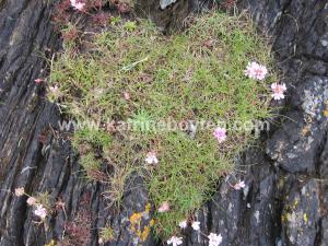 watermarked mossy heart